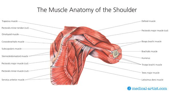 how to build shoulder muscles